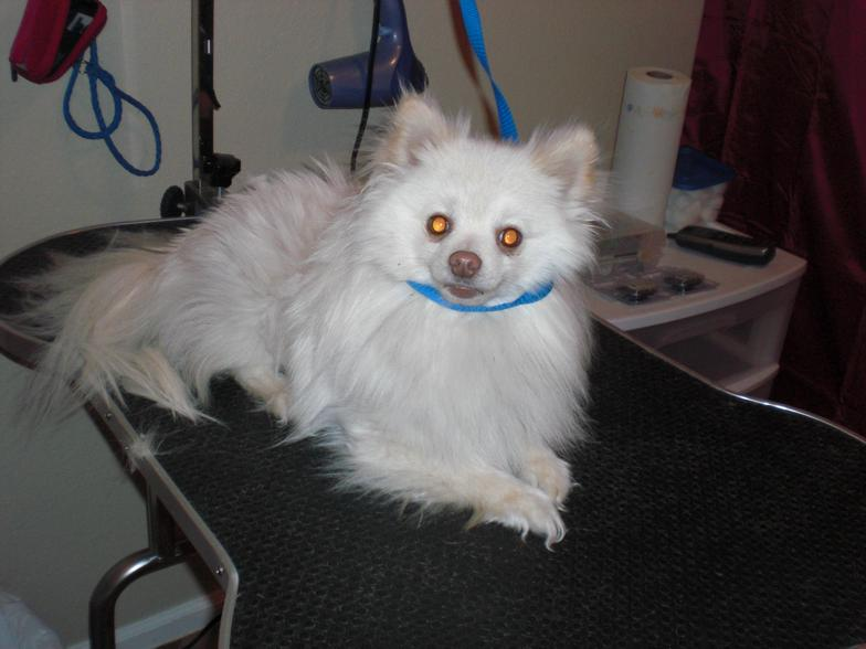 Dog Grooming Casper Wy